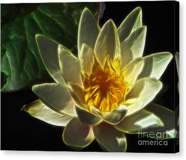 Water Lily Canvas Print by Yvonne Johnstone