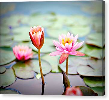 Water Lily's II Canvas Print by Tammy Smith