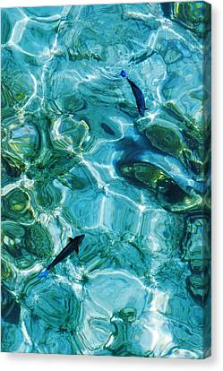 Transparency Canvas Print - Water Meditation II. Five Elements. Healing With Feng Shui And Color Therapy In Interior Design by Jenny Rainbow