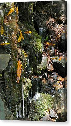 Canvas Print featuring the photograph Water Of Life by Michele Myers