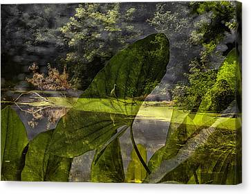 Water Plant With Bird Merged Image Canvas Print by Thomas Woolworth