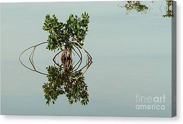 Water Pond  Canvas Print by Javier Correa