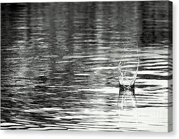 Water Canvas Print by Prajakta P