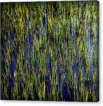 Water Reeds Canvas Print by Karen Wiles