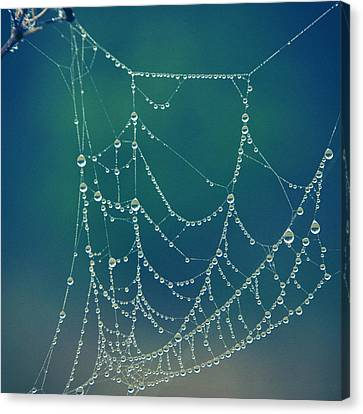 Water Web Canvas Print by Beverly Stapleton