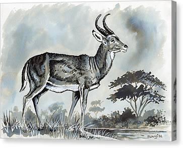 Waterbuck Canvas Print by Anthony Mwangi