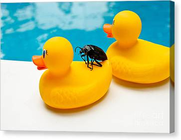 Perched Canvas Print - Waterbug Takes Yellow Taxi by Amy Cicconi