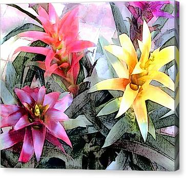 Bromeliad Canvas Print - Watercolor And Ink Sketch Of Colorful Bromeliads by Elaine Plesser