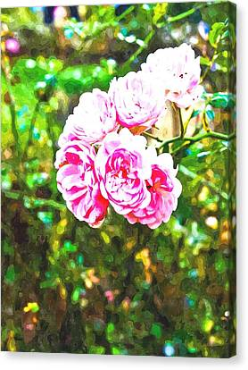 Watercolor Of Pink Fairy Roses In Nature Canvas Print