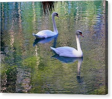Watercolor Swans Canvas Print