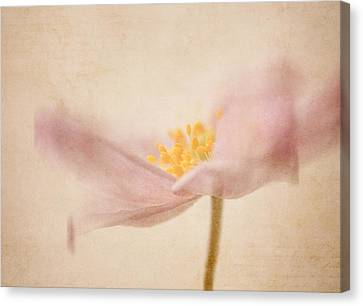 Watercolour Whispers Canvas Print by Amy Weiss