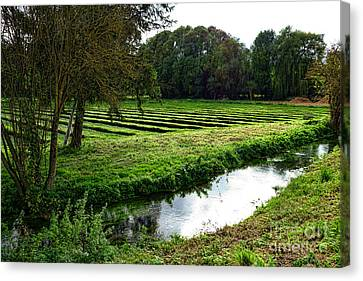 Watercress Field Canvas Print by Olivier Le Queinec