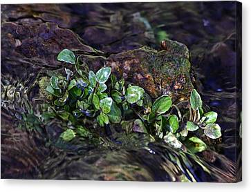 Watercress Wet And Wild Canvas Print by Leda Robertson