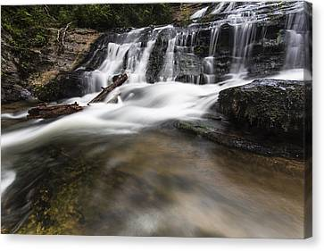Watered Log Canvas Print by Bill Cantey