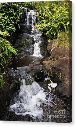 Waterfall And Stream Canvas Print by Sami Sarkis