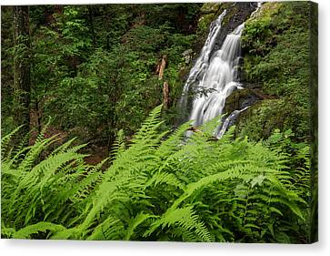 Litchfield County Canvas Print - Waterfall Fern by Bill Wakeley