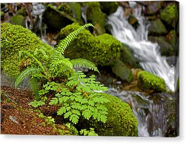 Waterfall Mount Rainier National Park Canvas Print by Bob Noble Photography
