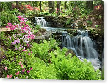 Waterfall With Ferns And Azaleas Canvas Print