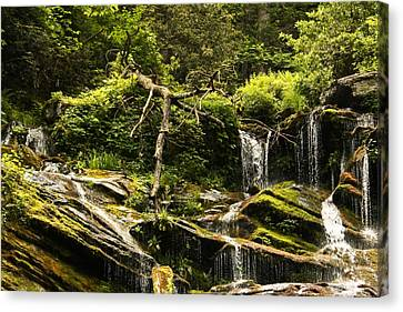 Canvas Print featuring the photograph I'm Free.... Free Falling by Tammy Schneider