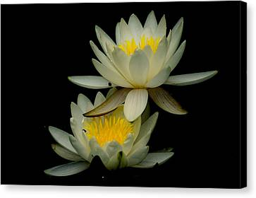 Waterflower Canvas Print