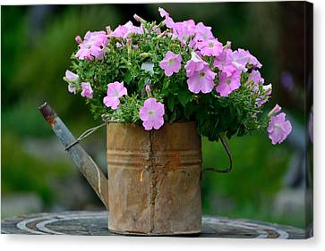 Watering Can And Flowers Canvas Print by Kathy King