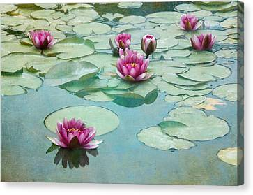 Waterliles Canvas Print by Carolyn Dalessandro