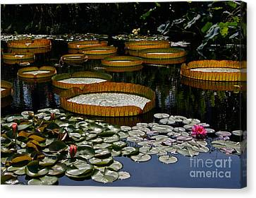 Waterlilies All Canvas Print by Byron Varvarigos