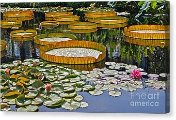 Waterlilies All -- Version 2 Canvas Print by Byron Varvarigos