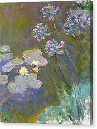 Waterlilies And Agapanthus Canvas Print