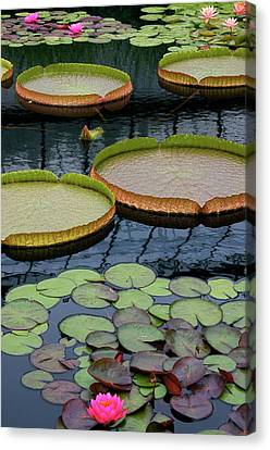 Waterlilies And Platters 2 Canvas Print by Byron Varvarigos