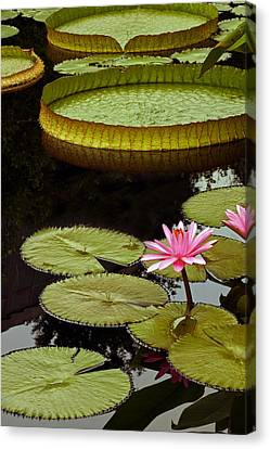 Waterlilies And Platters Vertical Romance Canvas Print by Byron Varvarigos