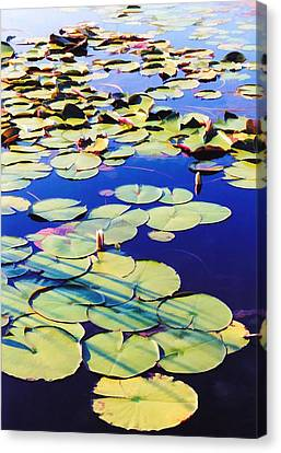 Waterlilies Canvas Print by Jan Amiss Photography