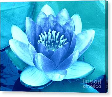 Waterlily Blue 2 Canvas Print by Margaret Newcomb