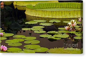 Waterlily Charm Canvas Print by Byron Varvarigos