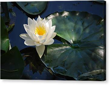 Canvas Print featuring the photograph Waterlily by Janis Knight