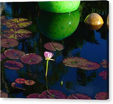 Waterlily Reflection Canvas Print
