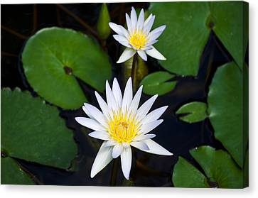 Waterlily Two Canvas Print