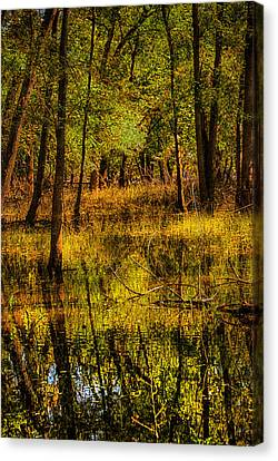 Canvas Print featuring the photograph Watery Ramble by Kimberleigh Ladd