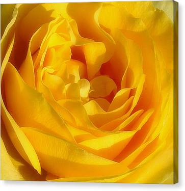 Waves Of Gold Canvas Print by Rosanne Jordan