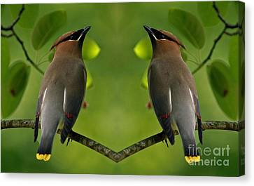 Waxwing Love Canvas Print by Inspired Nature Photography Fine Art Photography