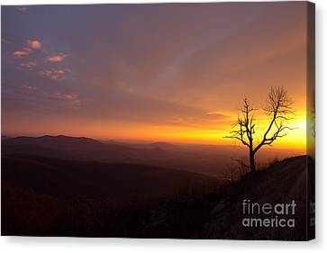 Way Of The Morning Canvas Print by Everett Houser