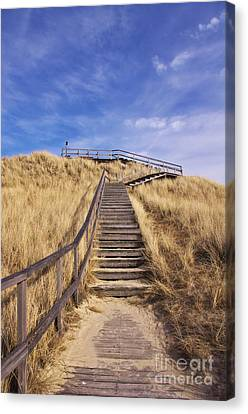 Way To Dune Canvas Print