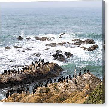 Cambria Canvas Print - We All Can Get Along by Mike Herdering