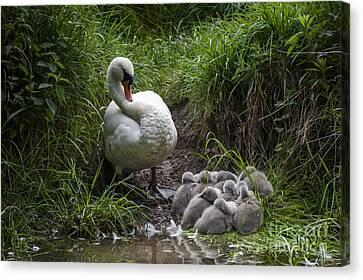 We All Here Mum Canvas Print by Svetlana Sewell