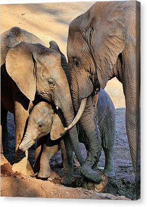 We Are Family Canvas Print by Ann Van Breemen