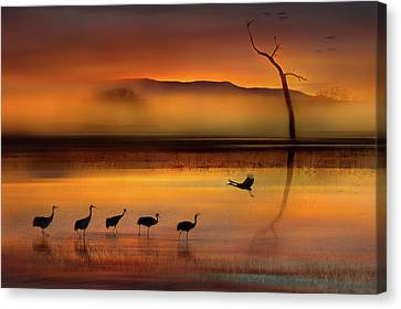 Sandhill Crane Canvas Print - We Are Here Waiting For You by Shenshen Dou