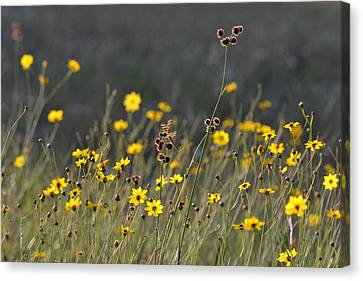 We Kissed The Lovely Grass Canvas Print by Melanie Moraga