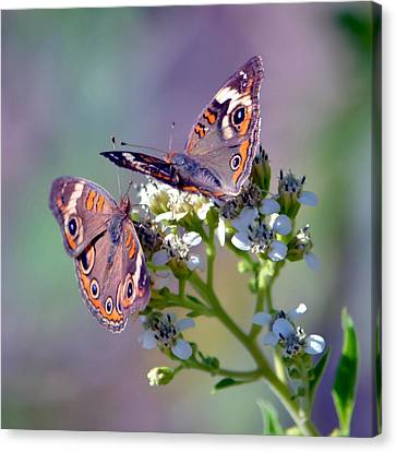 Canvas Print featuring the photograph We Make A Beautiful Pair by Deena Stoddard