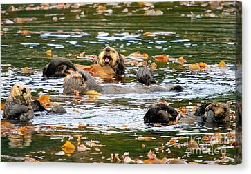 Otter Canvas Print - We Otter Be In Pictures by Bob Hislop