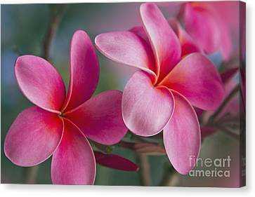 Canvas Print featuring the photograph We Were Together . . .  by Sharon Mau